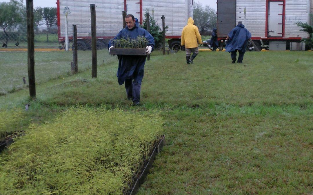 Vivero Forestal en el Campus: incorporaron 50 mil algarrobos