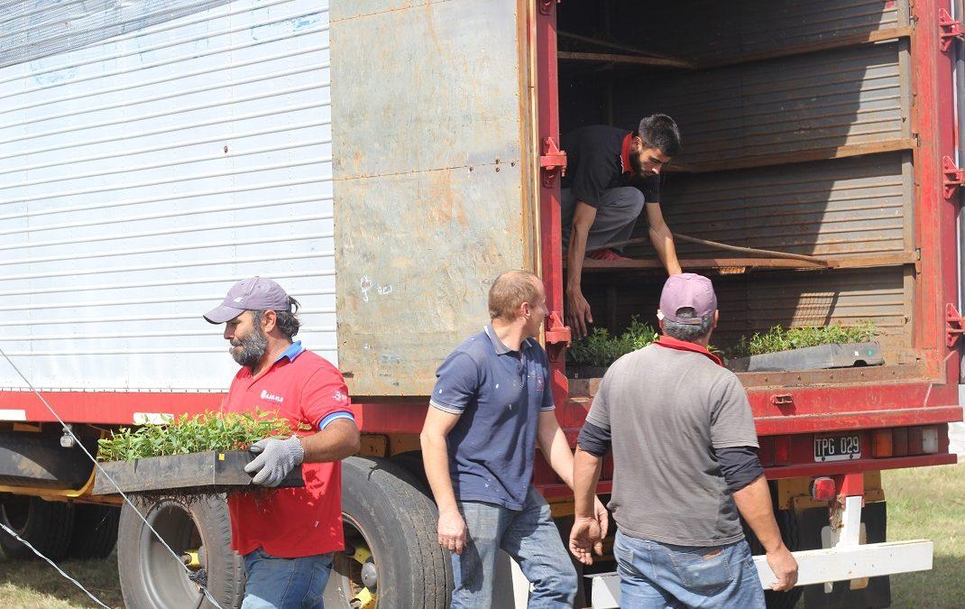 Llegaron 72 mil plantines al vivero del Campus