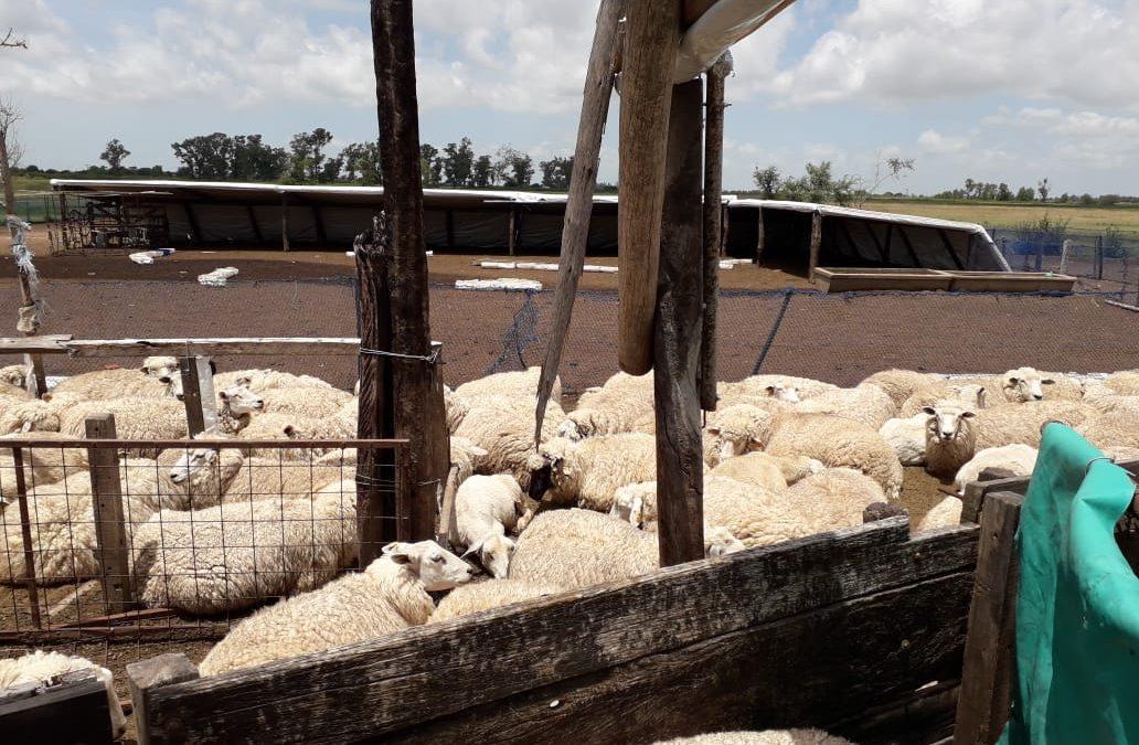 Taller sobre la cadena ovina y sus perspectivas