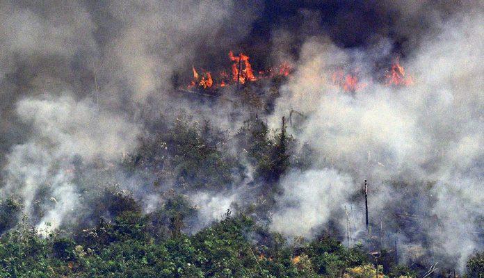 Incendio del Amazonas: la importancia de recuperar los bosques nativos